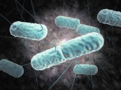 In Österreich waren 227 Menschen von lebensmittelbedingten Erkrankungen betroffen.