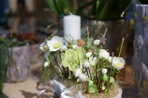 Viele Blumen hellen die Wohnung auch an dunklen Wintertagen auf.Christine Karg