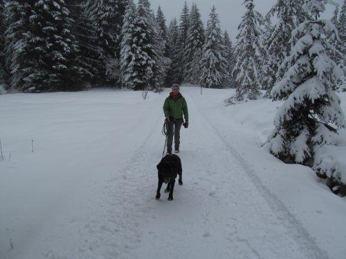 Auch Hunde haben im Schnee ihren Spaß. Auf Wanderwegen gehören sie allerdings an die Leine. Eine Schleppleine bietet genügend Auslauf.privat