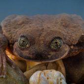 Einsamer Frosch bekommt Partnerin