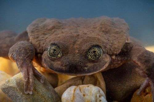 Forscher wollen die seltene Art vor dem Aussterben bewahren. AFP