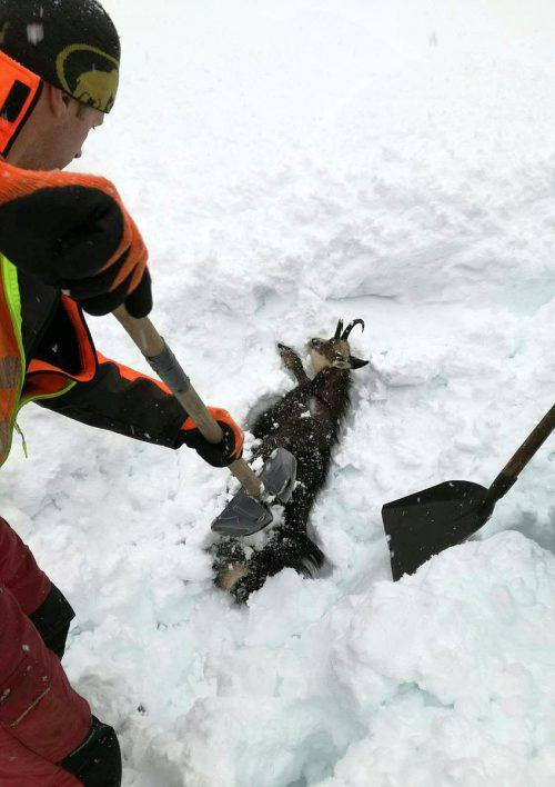 ÖBB-Mitarbeiter konnten das Tier unverletzt befreien. APA/ÖBB