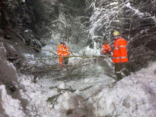 Viele Bäume brachen unter der Schneelast zusammen. Bald könnten die Borkenkäfer darüber herfallen. FW Doren