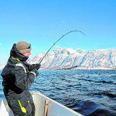 Große Fische beim Winterangeln