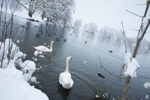 Winterzauber am Jannersee: Der Baggersee liegt inmitten des Landschaftsschutzgebiets Lauteracher Ried. VN/Rhomberg