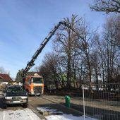 Infizierte Eschen in Meiningen gefällt