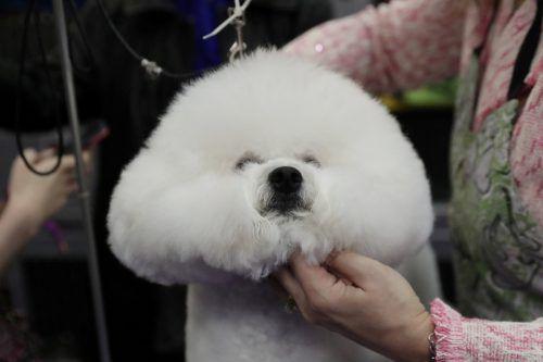 Auf die Haarpracht von Hund und Besitzer wird besonders Wert gelegt. AFP, Reuters