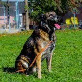 Ruhige Plätze für Seniorenhunde