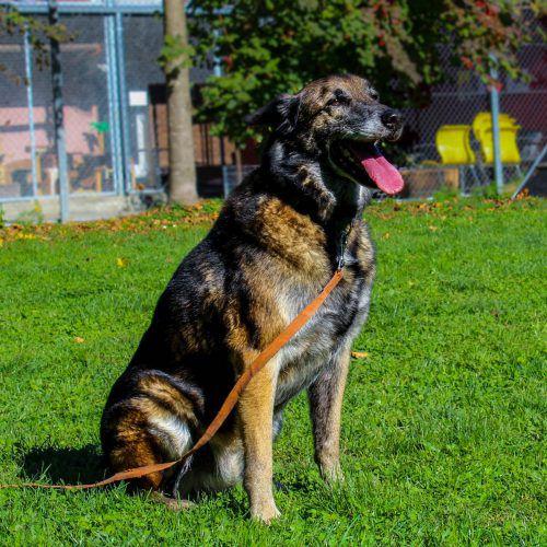 Die Seniorenhunde Figo (l. o.) und Coco (l. u.) brauchen ruhige Plätze. Nicht einzeln vermittelt werden Kaninchen Momo (r. o.) und die DegusTarzan, Rombo und Bobby.  TSH
