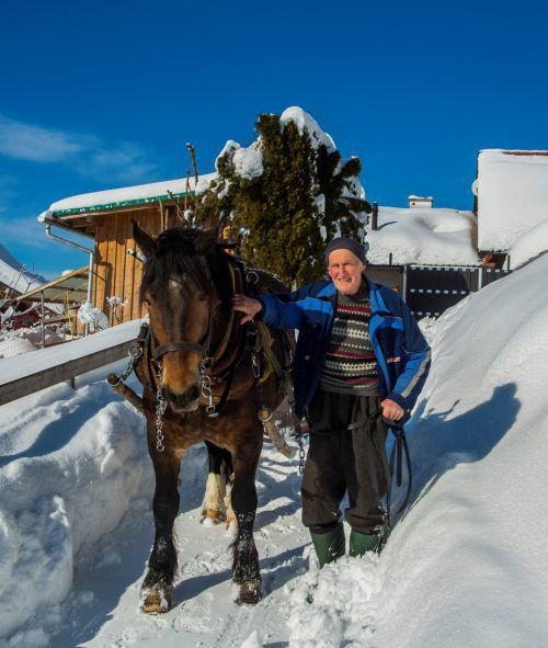 Ferdinand Kaufmann und seine Norikerstute Elisa kümmern sich um die Schneeräumung auf den Wanderwegen rund um Kehlegg. VN/Paulitsch