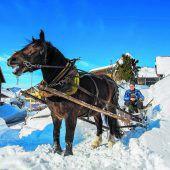 Schneeräumung mit einer Pferdestärke