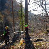 Forstarbeiten in Götzis wegen kranker Eschen