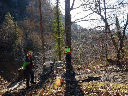 Im Bereich Kalkofen ist die Götzner Forstabteilung derzeit mit dem Entfernen kranker Bäume beschäftigt. Gemeinde