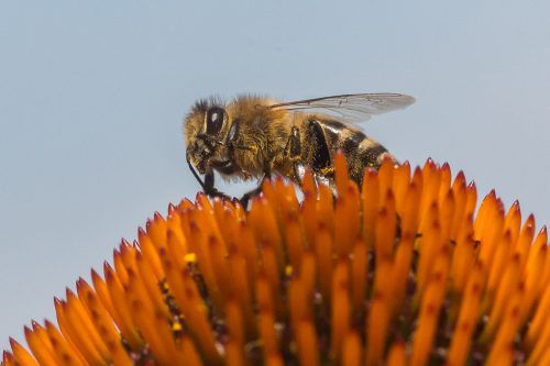 Infos zum Thema Bienenzucht gibt es am Freitag im Kitzinger. VN/Steurer