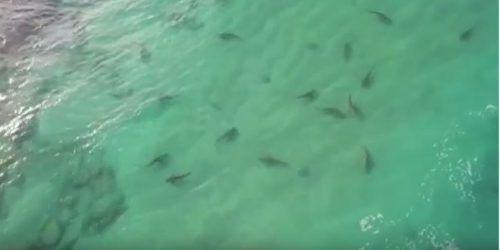 Seit Ende November werden Dutzende Haie vor der Küste Israels gesichtet. Youtube