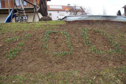 Auf dem Rohnenhügel wurden Narzissen gepflanzt, die, sobald sie blühen, das Jubiläumsjahr des OGV anzeigen.