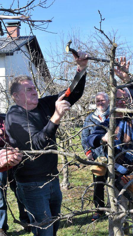 Beim Baumschnittkurs des OGV Götzis wurde auch praktisch gearbeitet. Loacker
