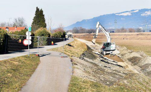 Das Radweg auf Höchster Gemeindegebiet verlief bisher auf dem Damm, ein Teilstück wird ins Rheinvorland verlegt. ajk