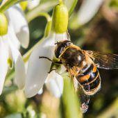 Vereint im Kampf für unsere Bienen