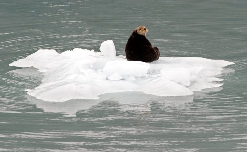 Der US-Bundesstaat Alaska erlebt eine Rekord-Hitzewelle. Vor allem im arktischen Norden liegen die Temperaturen derzeit um die 20 Grad höher als sonst, sagte der Klimaexperte Rick Thoman vom Alaska Center for Climate Assessment in Fairbanks.