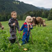 Die Alpen als Zugpferd