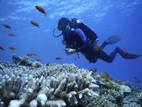 Die Erwärmung der Ozeane hat weltweit bereits unzählige Korallenriffe zerstört. Der nördlichste Zipfel des Roten Meeres blieb von der sogenannten Bleiche aber bisher verschont. AP