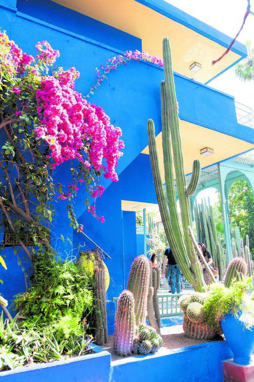 Die Gebäude im Jardin Majorelle des Modeschöpfers Yves Saint Laurent strahlen im berühmten Blau. Beate Rhomberg (5)
