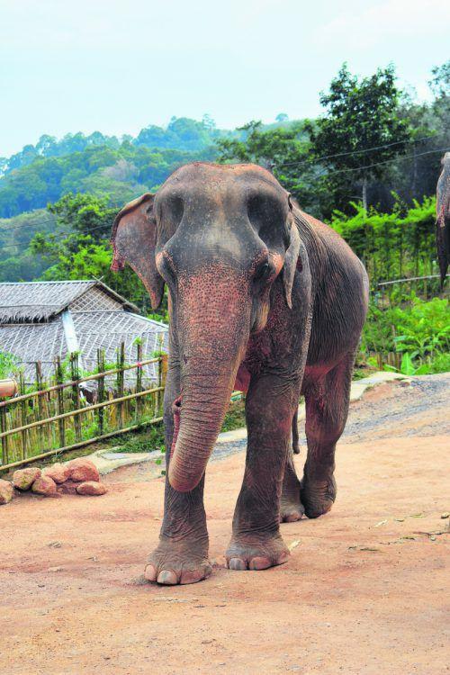 Die majestätischen Elefanten zu füttern und zu streicheln ist eine besondere Erfahrung. Christina Peter (5)