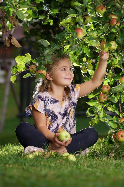 Die sechsjährige Valentina aus Andelsbuch hat den gesundheitlichen Wert von Äpfeln aus dem eigenen Garten schon längst entdeckt.Ludwig berchtold