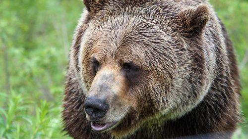 Die Wildnis Nordamerika steht heute in Schruns im Vortragsfokus.veranstalter