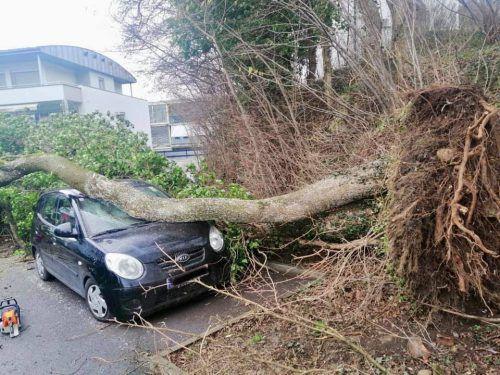 In Götzis krachte ein Baum auf Autos, am Güterbahnhof wurden Container umgeblasen. FW, vol.at