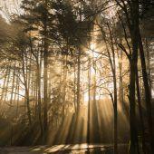 Preise für Wald im Land stagnieren seit Jahren