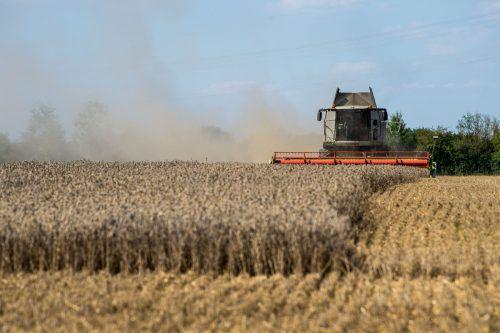 Als Ursache für den Rückgang gilt die letztjährige Dürre in weiten Teilen Europas apa
