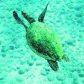 Unterwasserweltvor Caño Island