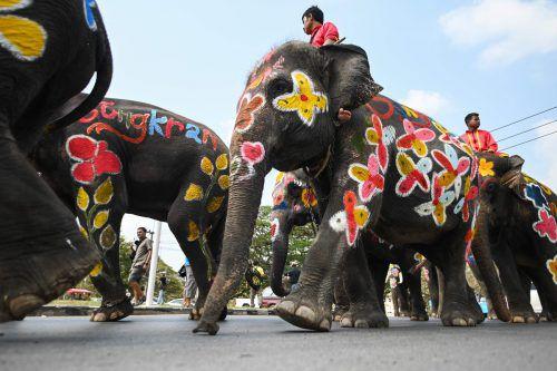 Bunt bemalte Elefanten bei einer Prozession zum Auftakt der Feierlichkeiten. AFP