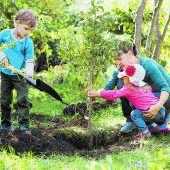 Jetzt ist die Zeit, Obstbäume zu pflanzen
