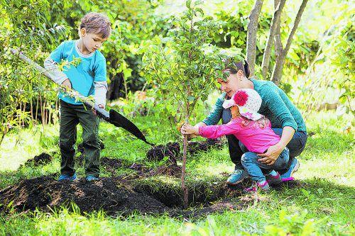Damit der Obstbaum gerade eingepflanzt wird, ist Teamwork angesagt.Shutterstock