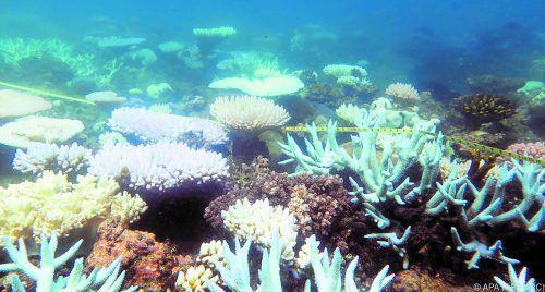 Das Great Barrier Reef beherbergt eine einzigartige Tier- und Pflanzenwelt. APA
