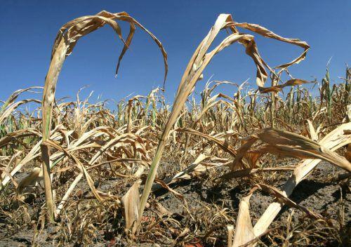 Der Klimawandel hat großen Anteil an extremen Wettersituationen. apa