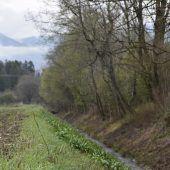 Windschutzgürtel im Rankweiler Weitried bedarf der Pflege