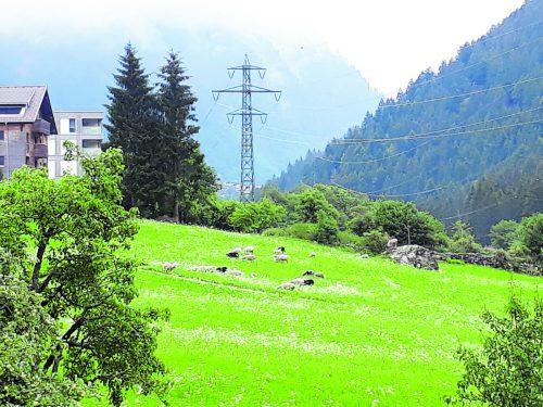 Die betreffende Schafherde, von der in den vergangenen Monaten bis auf eines verendet ist, im vergangenen Sommer auf einer Weide. leserreporter