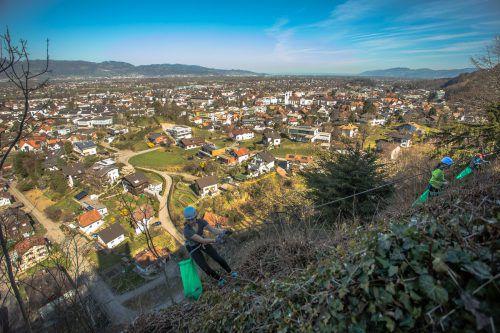 Die Götzner Alpenvereinsjugend säuberte den Felshang unter der Ruine Neu-Montfort. vn/steurer