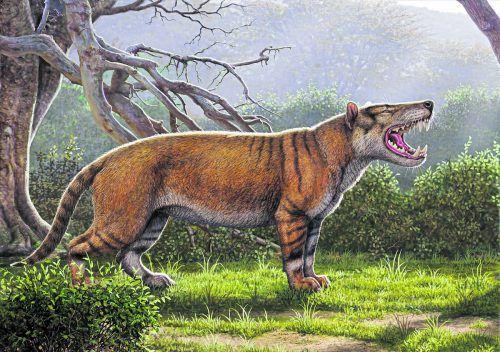 Die neue Spezies wurde Simbakubwa kutokaafrika getauft. APA