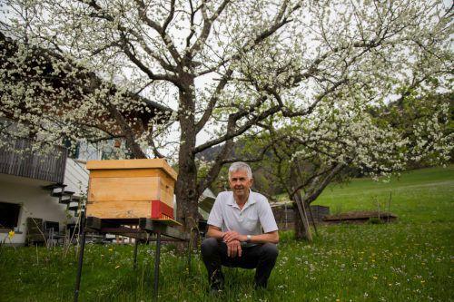 Ein Bienenhaus unter einem blühenden Obstbaum. Besser können es die beliebtesten Insekten des Menschen nicht haben. Vinzenz Lässer weiß das.VN/Paulitsch