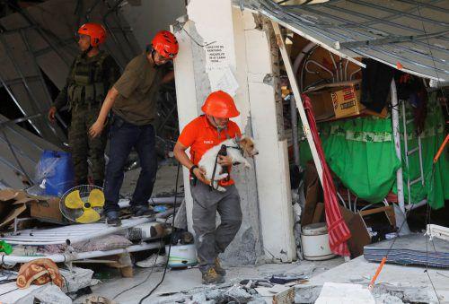 Einen Tag nach dem Erdbeben auf den Philippinen mit 16 Toten wurde der Inselstaat von einem neuen Beben erschüttert. Rettungskräfte und Rettungshund suchen in zerstörten Häusern in Porac Überlebende. Reuters