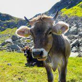 Wanderregeln nach Kuh-Urteil. A10
