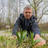 Nach Giftfund im Bärlauch: Klaus Zimmermann gibt Tipps für das Sammeln. A8