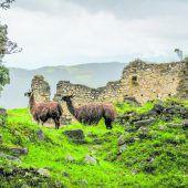 Geheimnis im Nebelwald Perus