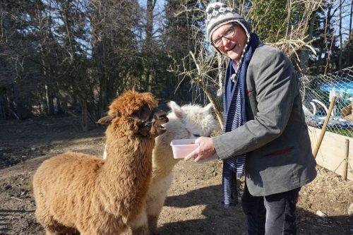 Macho und Bambolino genießen den großen Auslauf mit Walter Micheluzzi im Grünen in Hohenweiler. hapf