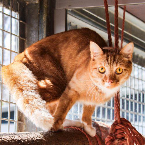 Möglichst bald aus dem Tierschutzheim ausziehen möchten Kater Messy (l. o.) mit Katze Prinzessin, Golden Retriever Sammy und Rattenmännchen Blacky. TSH